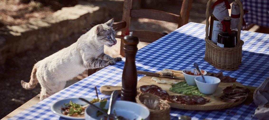 alimentatie animale de companie