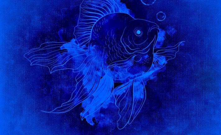 fish-978551_960_720