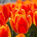 Secretul florilor
