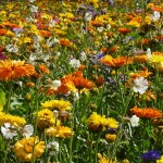 10 flori care fac minuni