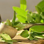 5 plante pentru o digestie ușoară