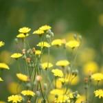12 medicamente inlocuite cu plante