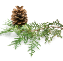 http://localhost/femeia/wp-content/uploads/2012/03/21/1-1566.png