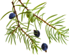 http://localhost/femeia/wp-content/uploads/2012/03/21/1-1574.png