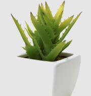 http://localhost/femeia/wp-content/uploads/2012/03/21/ghiveci-aloe.png