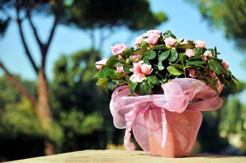 http://localhost/femeia/wp-content/uploads/2013/06/11/plante-terapeutice-2.jpg