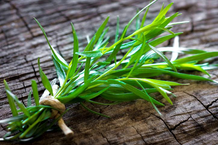 plante aromatice tarhon