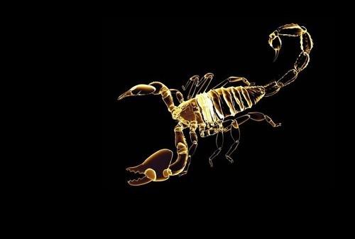 http://localhost/femeia/wp-content/uploads/2013/11/06/scorpion-2.jpg