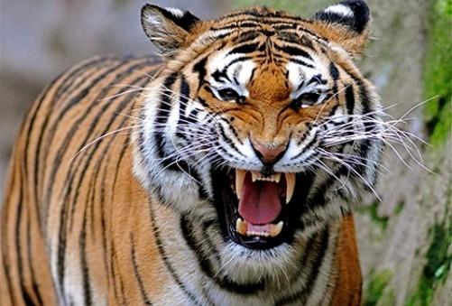 http://localhost/femeia/wp-content/uploads/2013/11/22/leonardo-dicaprio-da-3-milioane-dolari-tigri-2.jpg