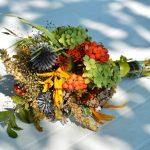 Ierburi medicament. Puterile tamaduitoare ale plantelor