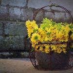 Flori pentru Ziua Indragostitilor