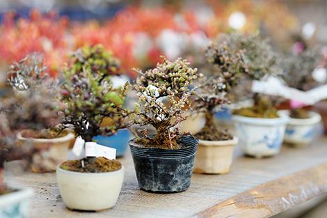 http://localhost/femeia/wp-content/uploads/2015/02/09/bonsaiul-decorare.jpg