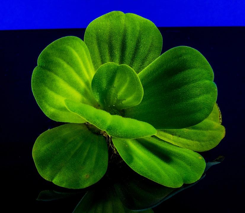 5 plante utile in cura de detoxifiere for Plante utile