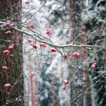 Secretele lunii decembrie. Istorie, tradiție, mitologie