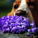 Plantele, inofensive pentru animale?