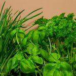 Condimente verzi din grădină