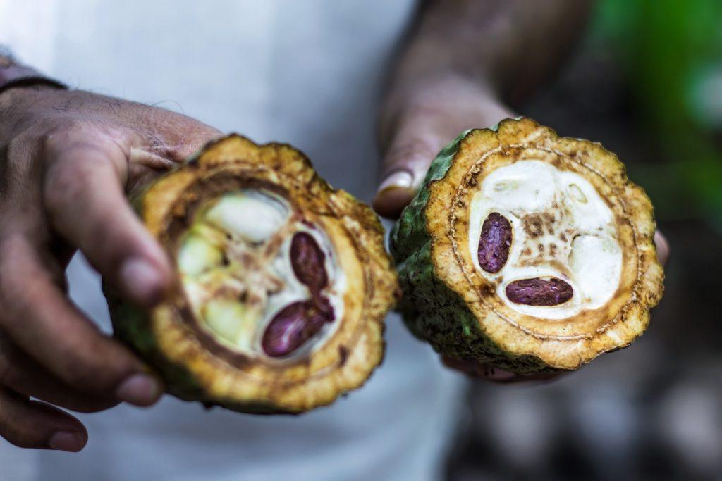 boabe_de_cacao_fruct_de_cacao_arbore_de_cacao_unt_de_cacao