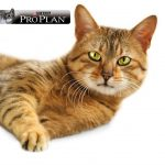 (P) Sănătatea pisicii tale începe cu o nutriție adaptată