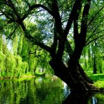 Leacuri din coji de copac