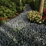 Olanda, primăvara Nordului
