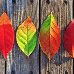 Puterea culorilor asupra sănătății