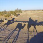 Enigmele deșertului Sahara