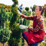 Amenajări de sezon: 8 arbori și arbuști decorativi pentru grădina ta