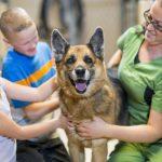 Cum poți ajuta animalele fără stăpân dacă nu poți adopta