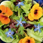 Flori multicolore în jardiniere și-n… farfurie
