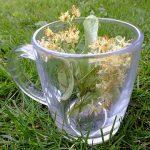 Plante pentru menopauză ușoară