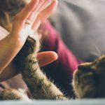 Pisicile, pufoșenii afectuoase și jucăușe