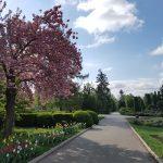 România ca o grădină botanică