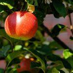 Horoscop zilnic- 13 septembrie. O zi dulce ca un mar de toamna si un weekend agitat