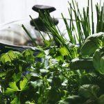 Plantele aromatice, comoara din cămara ta