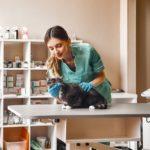 Sterilizarea pisicilor. Beneficii, tipuri, recuperarea după intervenție