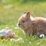 Iepurașul și mielul de Paște