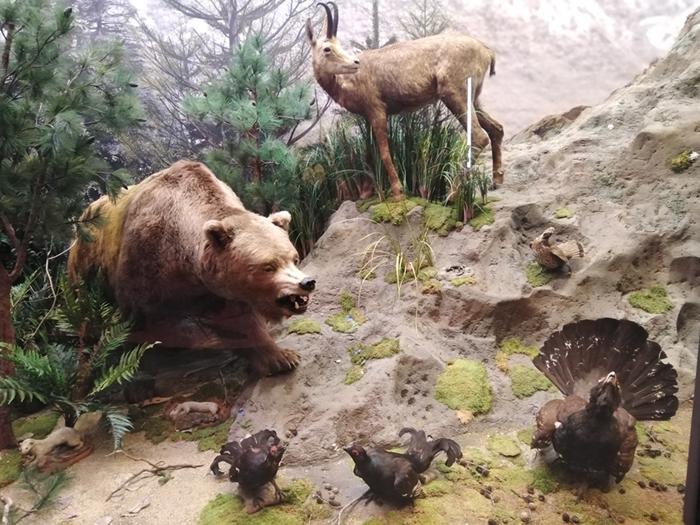 Muzeul de Istorie Naturală