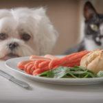 9 alimente toxice pentru câini și pisici