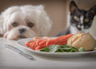 alimente toxice pentru animale