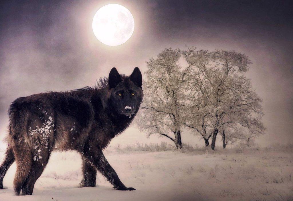 Horoscop zilnic – 28 ianuarie 2021. Luna Lupului, prima lună plină a anului
